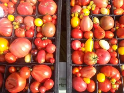 Herb Tomaten