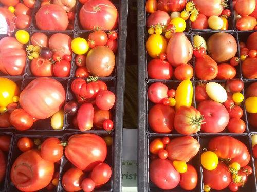 Tomatenverkostung Herb