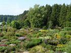 Der grosse Schaugarten und Mutterpflanzen-Acker