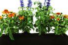 Der fertige Blumenkasteneinsatz