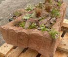 Frisch bepflanzter Trog - Neuseeland