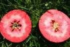 Der rotfleischige Apfel Redlove Era
