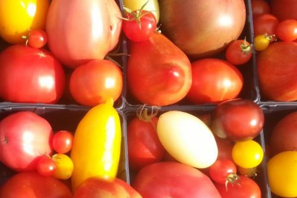 Kein Patent auf Tomaten!