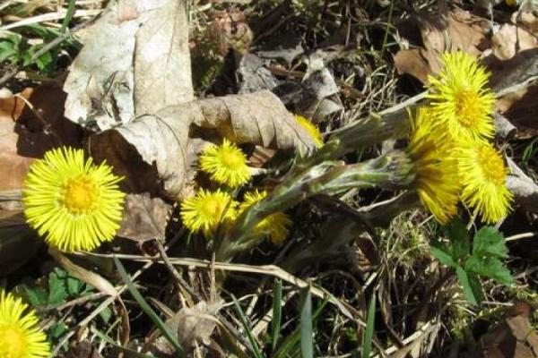 Drei wunderbare Frühlingshelfer