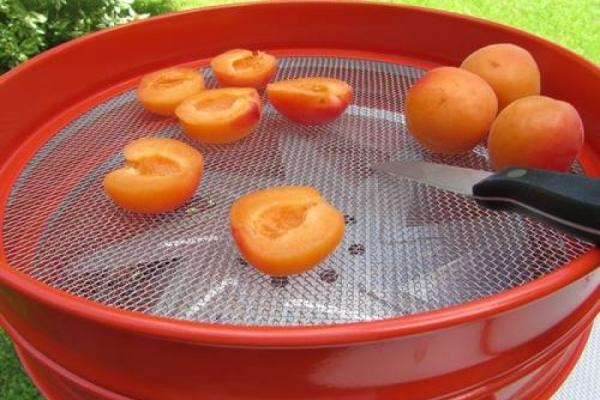 So geht's: Aprikosen trocknen