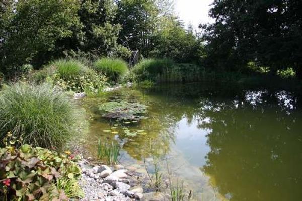Pflanzzeit am Teich