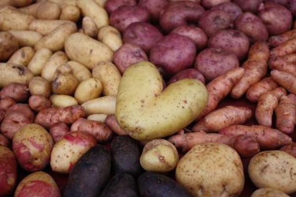 Kartoffeln auf Lager