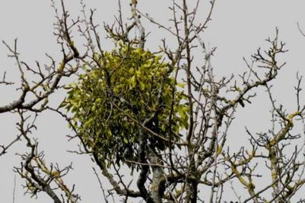 Vom Baum in den…