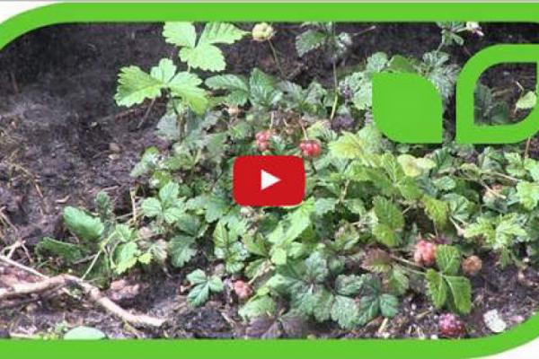 Gartenvideo des Monats -…