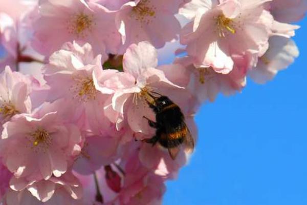 Bestäubungshilfe für Bienen und…