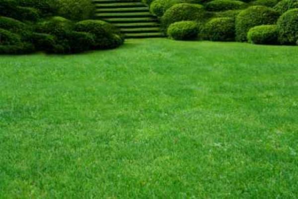 Neuer Rasen muss langsam…