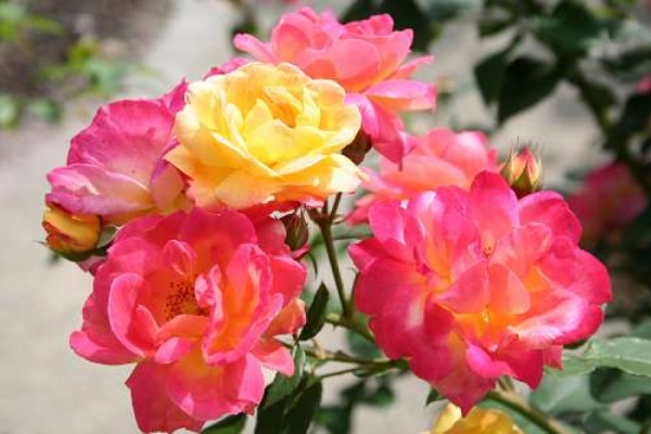 Zweite Halbzeit für Rosen