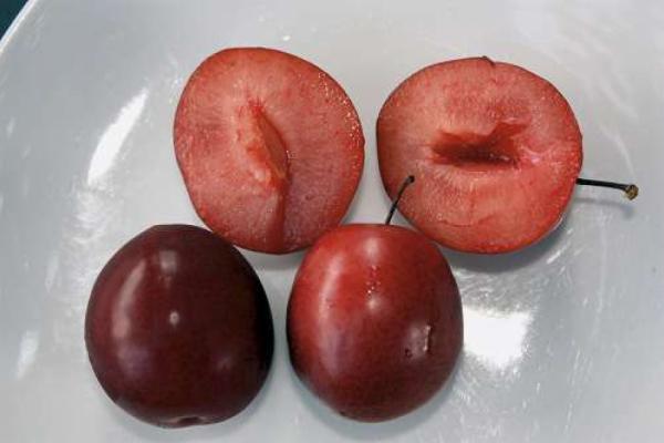 Geschmackstest für Schweizer Obstsorten