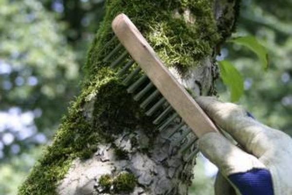 Wellness für die Baumhaut