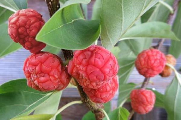 Beeren mit Wassermelonen-Geschmack