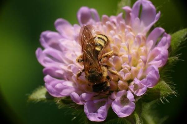 Mehr Wildbienen durch Klimaerwärmung