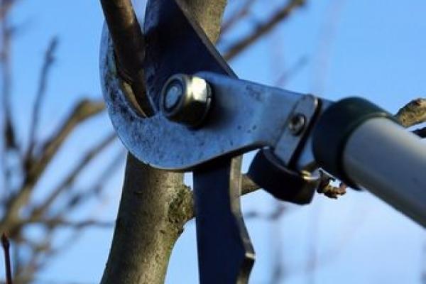 Prinzipien für den Obstbaum-Schnitt