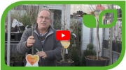Gartenvideo des Monats - April '18