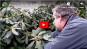 Gartenvideo des Monats - April '19