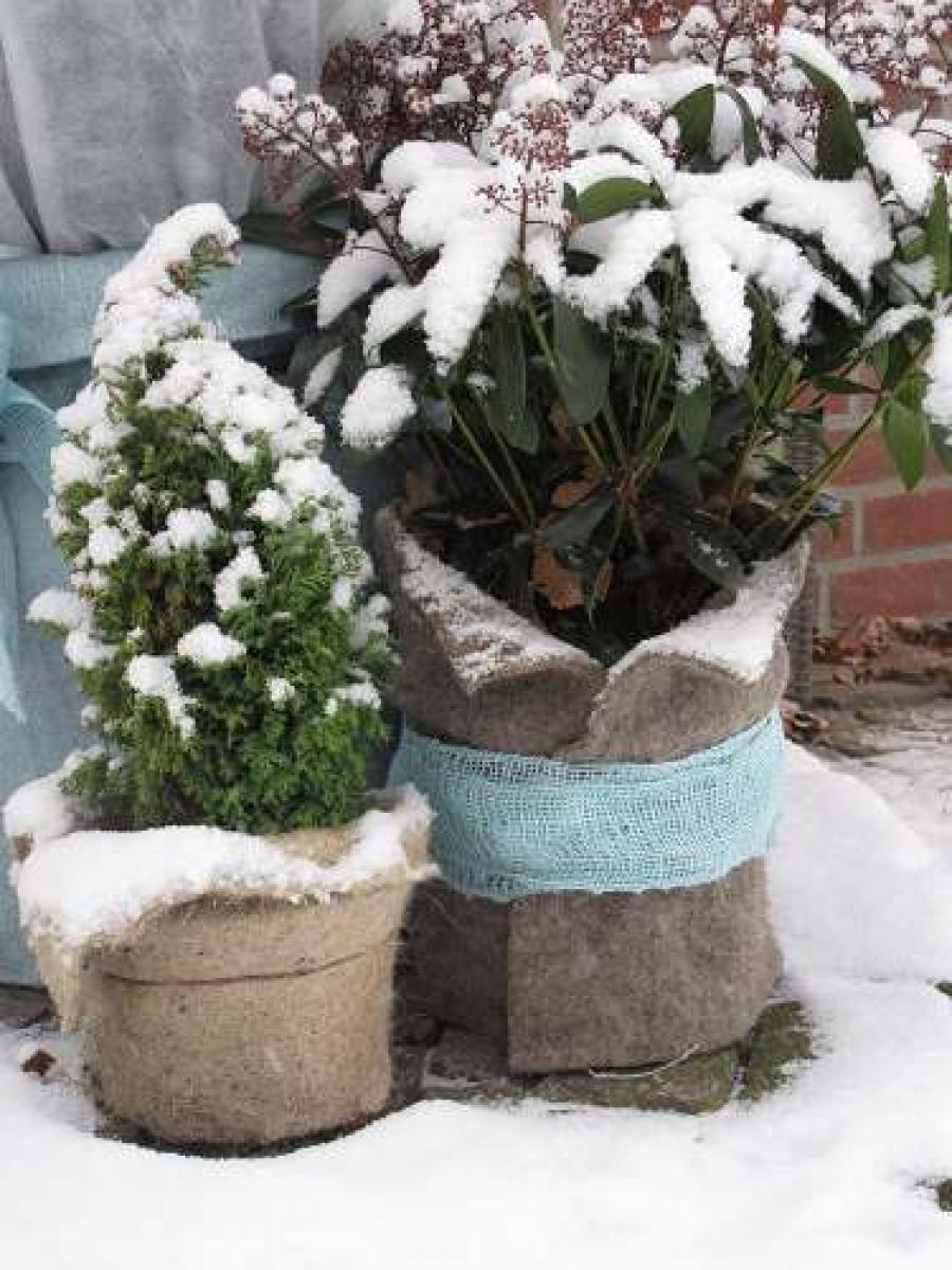 Pflanzen Draußen überwintern