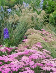 Harmonische Kombination von Gräsern, Kerzen und Schirmen: Silber-Ährengras (Stipa calamagrostis), Rittersporn und Schafgarbe.